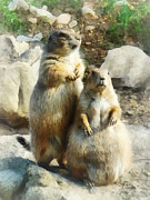 Prairie Dog Art - Prairie Dog Formal Portrait by Susan Savad
