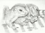 Puppies Drawings Framed Prints - Prairie Dogs Framed Print by Susan Bromlow