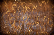 Prairie Grass Originals - Prairie Grass Blades by Steve Gadomski