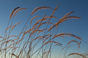 Native Photos - Prairie Grass Landscape by Steve Gadomski
