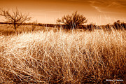 Mickey Harkins - Prairie Grass