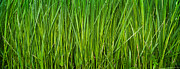 Prairie Grass Originals - Prairie Grass Panorama by Steve Gadomski