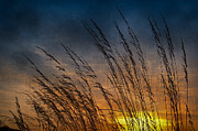Sihlouette Posters - Prairie Grass Sunset Patterns Poster by Steve Gadomski