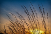 Prairie Framed Prints - Prairie Grass Sunset Framed Print by Steve Gadomski