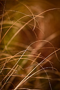 Prairie Photo Posters - Prairie Grasses Number 4 Poster by Steve Gadomski