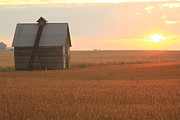 Corn Crib Photo Posters - Prairie Harvest  Poster by Jim Ferrier