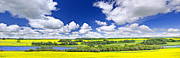 Yellow Prairie Photos - Prairie panorama in Saskatchewan by Elena Elisseeva