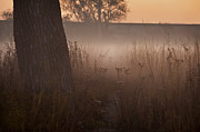 Prairie Grass Originals - Prairie Pre Dawn by Steve Gadomski