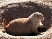 Prairie Dog Originals - Prairie Puppy by Jerilyn Davis