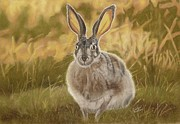 Rabbit Pastels - Prairie Rabbit by Evelyn Butler