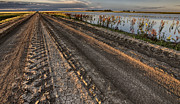 Farming Digital Art - Prairie Road Storm Clouds Mud Tracks by Mark Duffy