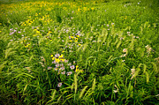 Flora Photo Originals - Prairie Tapestry by Steve Gadomski