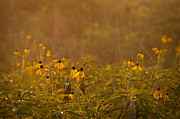 Goose Photo Prints - Prairie Wildflowers Print by Steve Gadomski