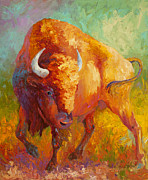 Buffalo Framed Prints - Prarie Gold Framed Print by Marion Rose