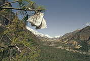 Pine Needles Posters - Prayer Flags In Pine Tree Above Valley Poster by Gordon Wiltsie