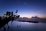 Miami Photos - Pre-dawn Mangrove by Matt Tilghman