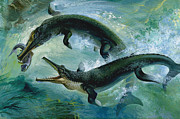 Crocodile Paintings - Pre-historic Crocodiles Eating a Fish by Unknown