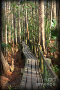 Florida Trees Posters - Precarious Path Poster by Carol Groenen