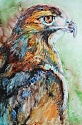 Red-tailed Hawk Paintings - Predator by Kate Lagaly