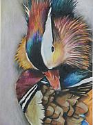 Mandarin Drawings - Preen by James Strohmeyer