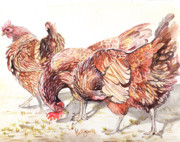Hens And Chicks Paintings - Preening by Callie Smith