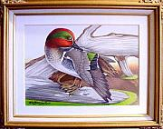 Larry Wetherholt - Preening Greenwing Teal