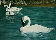 Swans... Paintings - Preening Swans by Robert Tower