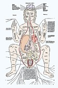 Labelled Prints - Pregnancy Anatomy, 15th Century Artwork Print by Sheila Terry