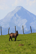 Atardecer Prints - Pregnant mare and Anboto mountain Print by Fernando Alvarez