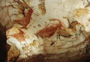 Mural Photos - Prehistoric Artists Painted Robust by Sisse Brimberg