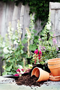 Hollyhocks Photos - Preparing Flower Pots by Stephanie Frey