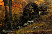 Fall Leaves Photos - Preserving the Past by Robin-Lee Vieira