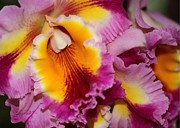 Pretty And Colorful Orchids Print by Sabrina L Ryan
