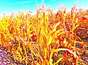 Corn Stalks Art - Pretty Dry by Chuck Taylor