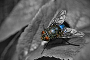 Selective Color Framed Prints - Pretty Fly For A Fly Guy Framed Print by Yhun Suarez