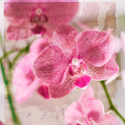 Drama Photographs Prints - Pretty in Pink Print by Pamela Ellis