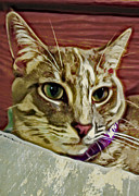 Kitten Prints Digital Art Posters - Pretty Kitty Poster by David G Paul