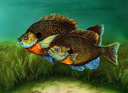 Fish Underwater Drawings - Pretty Little Panfish by Kathleen Kelly Thompson