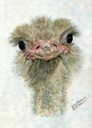 Ostrich Posters - Pretty Me Poster by Ellen Strope