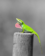 Reptilia Prints - Pretty Penny - Selective Color Print by Al Powell Photography USA