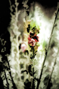 Photo Mixed Media - Pretty Perennial by Bonnie Bruno