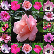 Pink Primroses Photos - Pretty Pink Flowers Collage by Kathryn Jones