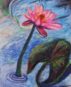 Pretty Pink In The Pond Print by Emily Michaud