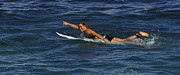 Laird Hamilton Photos - Pretty Powerful  by Bob Christopher