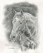 Quarter Horse Drawings Framed Prints - Pretty Sunflower Framed Print by Jana Goode