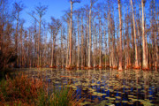 Tree Reflections In Water Posters - Pretty Swamp Scene Poster by Susanne Van Hulst