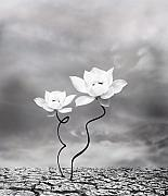 Lotus Prints - Prevail Print by Photodream Art