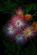 Prickly Framed Prints - Prickly Flower Framed Print by Christopher Lugenbeal