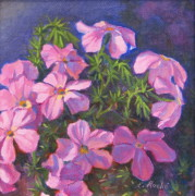 Phlox Painting Framed Prints - Prickly Phlox Framed Print by Elena Roche