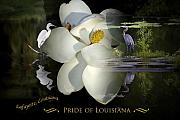 Cecil Fuselier - Pride of Louisiana